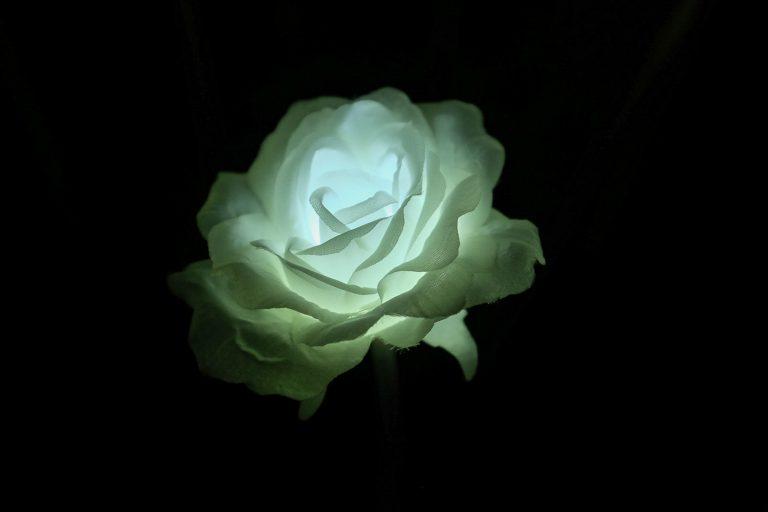 Light Rose Garden