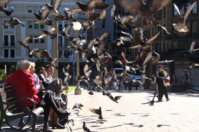 Hyde Park Pigeons